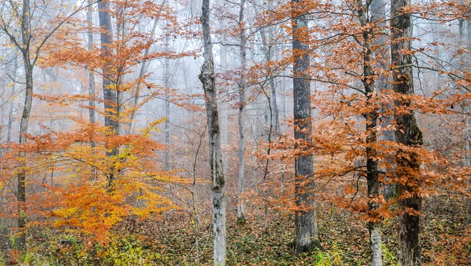 Nearly 300 acres will be logged in the Yellowwood State Forest after Indiana's Department of Natural Resources sells 1,700 trees at a timber sale on Thursday, Nov. 9, 2017.