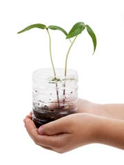 Just about anything can be used to start seeds indoors, as long as the container has hole in the bottom.