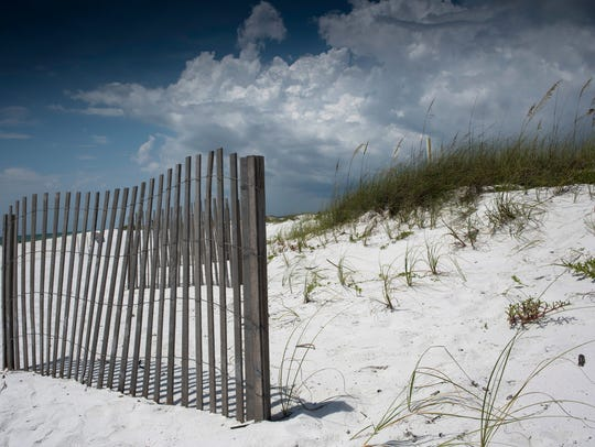 When beach goers trample vegetation, or, worse, pull it from the sand, they are aiding in the dune's eventual erosion, beginning a path of destruction.