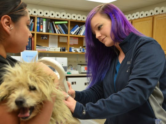 Cynthia Rink inserts a microchip into 'Mimi,' a terrior mix rescue dog.