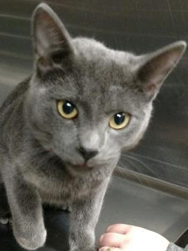 Smokey is the Current-Argus pet of the day.