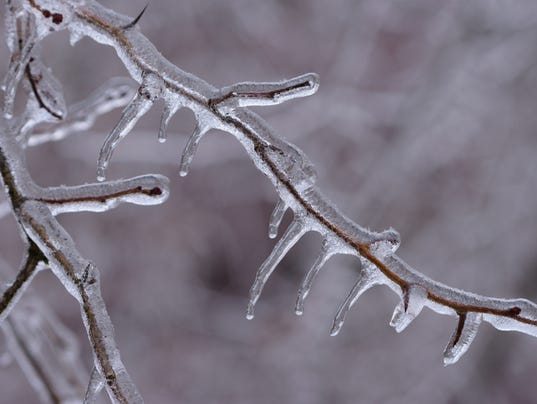 Ice Covering a Branch