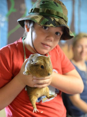 Joseph Wills, 10, holds a guinea pig, a substitute for a South American rodent named capybara, at Rieck Avenue School's simulated tropical rainforest on Wednesday.