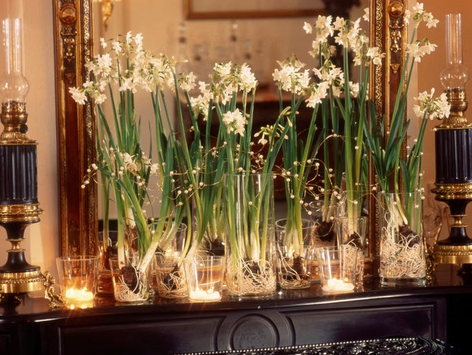 Cluster paperwhites on a fireplace mantel, entryway table or use as a tabletop decoration. String small lights or garlands of berries for a festive touch.