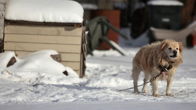 A dog stands in the snow outside a doghouse in Muncie in 2014.