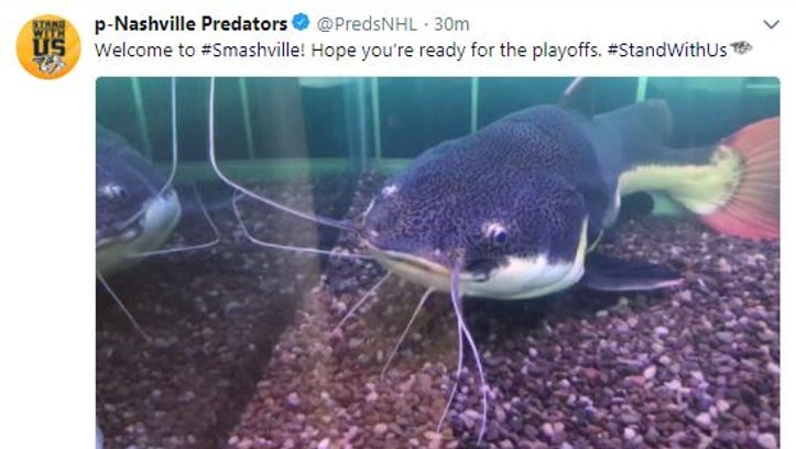 Look: Predators have a huge live catfish tank inside the arena for the playoffs