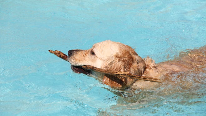 Fort Bliss will host its Doggy Swim Day on Sept. 17 at the Community Pool, 253 Club Road.