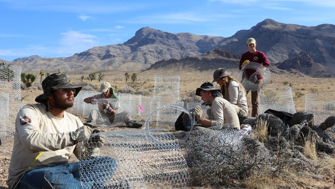 Volunteers with the American Conservation Experience prepare chicken wire for a habitat improvement project in the Beaver Dam National Conservation Area on Friday, Nov. 4, 2016.
