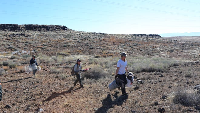 A team of technicians from the Utah Division of Wildlife Resources helped plant native plant species at a restoration site in the Red Cliffs Desert Reserve on Tuesday, Nov. 22, 2016.