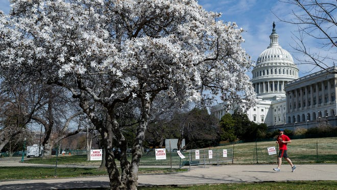 A jogger passes by a blooming Star Magnolia tree on a spring-like day on the grounds of the U.S. Capitol on Feb. 28, 2017.