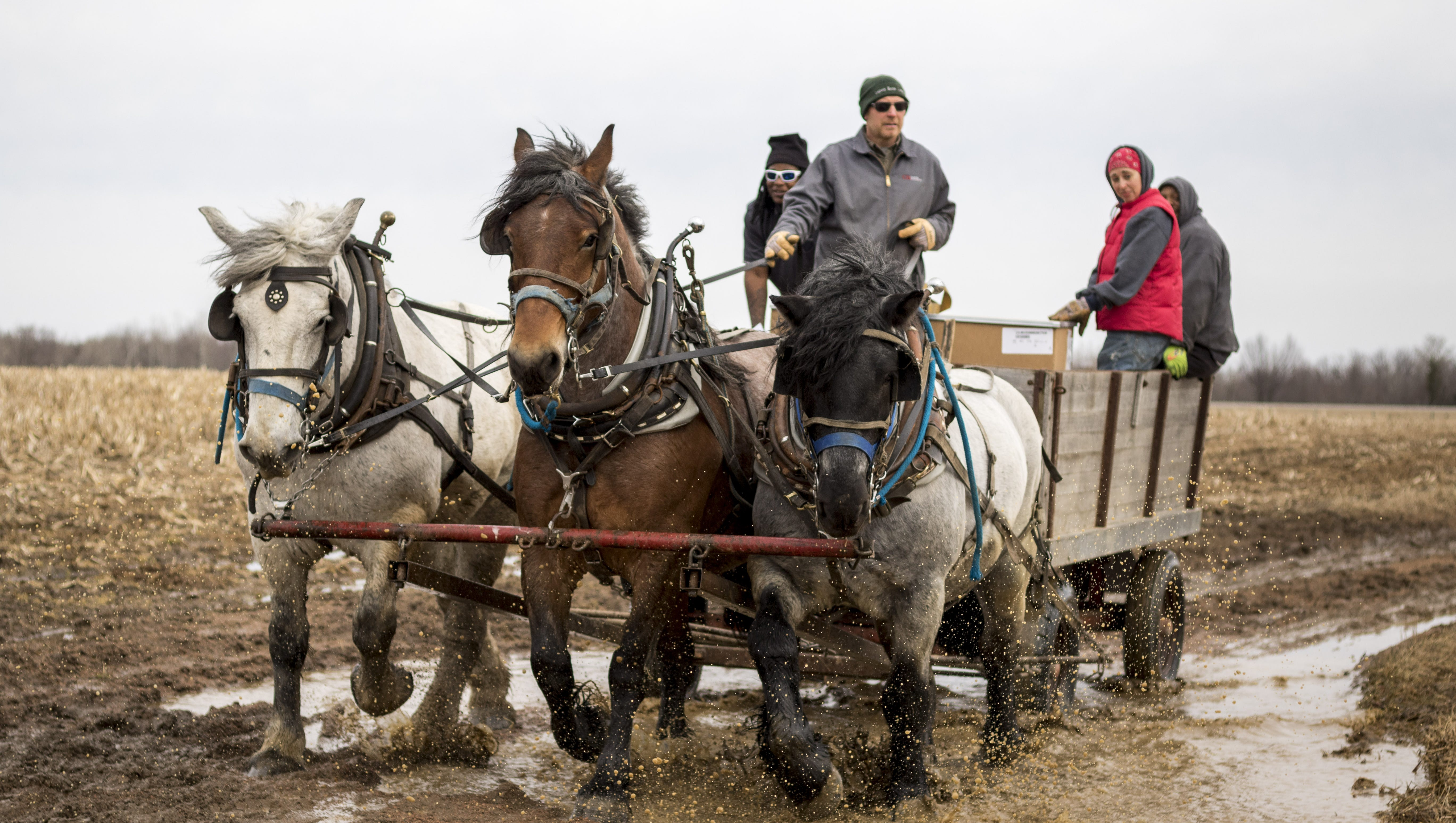 Horses Help U S Cellular Outfit Its Cellphone Towers In Rural Wisconsin