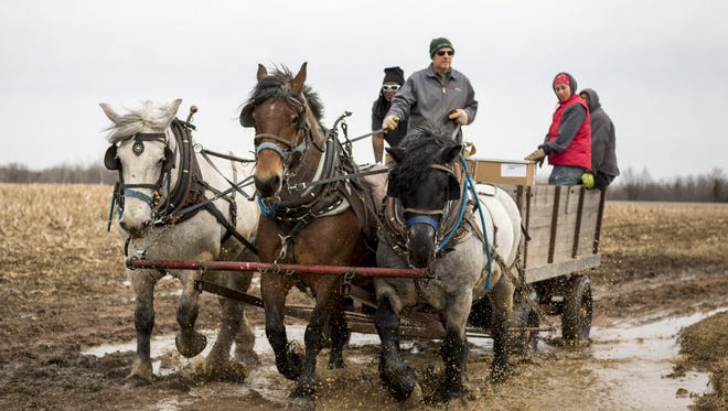 Jason Julian, a subcontractor for U.S. Cellular, uses a team of horses to transport supplies to a U.S. Cellular phone tower through muddy, uneven terrain in Portage County. U.S. Cellular has turned to draft horses for hauling equipment up steep wooded hillsides, places where trucks have gotten stuck in the mud and all-terrain vehicles haven't been up to the job.