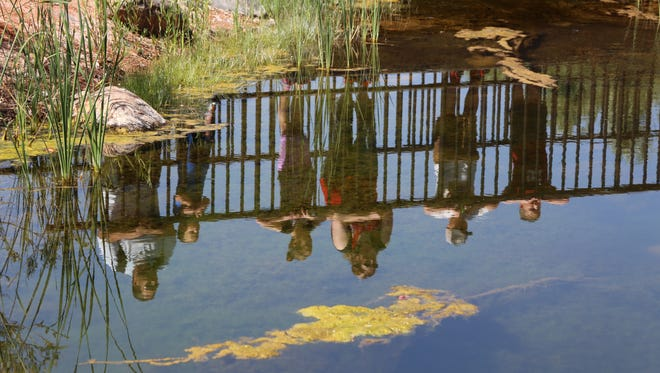 Visitors look into a pond at the Red Hills Desert Garden in St. George. The garden, which features local plant and fish species and highlights desert-adapted plants that use little water, has seen an uptick in attendance in 2017, according to managers with the Washington County Water Conservancy District.