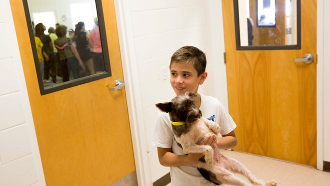 Corbin Henthorne, 9, holds a terrier mix, one of the 42 dogs up for adoption, at Collier County Domestic Animal Services in East Naples on Saturday, July 1, 2017. The dogs were put up for adoption through a lottery system after being rescued earlier in the week from a property in Golden Gate Estates.