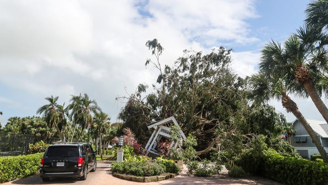 A giant tree at the entrance of Casa Ybel Resort blocked the road. Sanibel Island came through Hurricane Irma far better than was expected. They have trees down, now power and some flooding, but residents say that's better than the 15 feet of water the island was supposed to get.