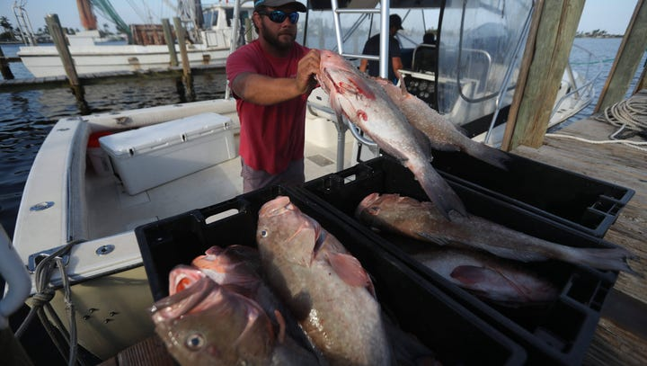 Florida's toxic algae crisis: Are Gulf and freshwater seafood safe to eat?