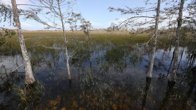 Voices from the Everglades: The people of the Everglades were affected by Hurricane Irma in various ways. Some say it's the worst experience they have ever been through others say its part of  Florida Everglades life.