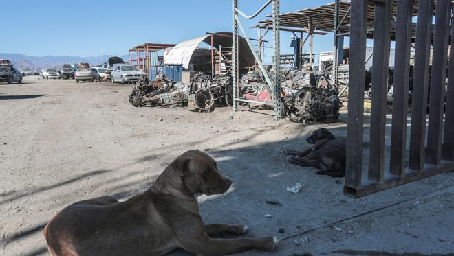 Dogs keep watch at the entrance of Desert Truck and Auto Parts in Coachella on Thursday, November 9, 2017. The owners of this auto salvage business is working with a developer to build facilities to lease to marijuana growers.