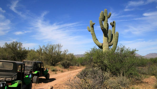 Impressive cacti greet visitors on the Green Zebra Desert Jeep Tour, which includes stops for information about the vegetation by the lead-vehicle guide.