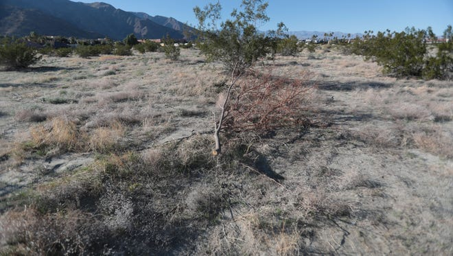 Developer Loren Ostrow plans to turn this plot of land on the northwest corner of N. Hermosa Drive and E. Tahquitz Canyon Way, into LGBT-friendly retirement condos. Photo taken on Friday February 16, 2018 in Palm Springs.