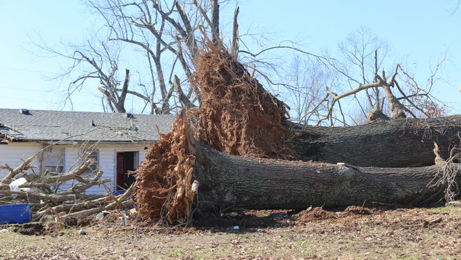 Trees were ripped from the ground on Martin Road in the Dotsonville community. This house was destroyed after it was lifted from its base.