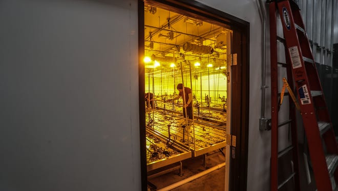 Workers clear out a grow room after a cannabis harvest on Tuesday, April 3, 2018 in Coachella.