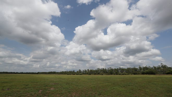 Some of the land is farmed. Making good on promises made at a series of community meetings, the developer of Babcock Ranch has offered to sell 2,250 coveted acres to Lee County's 20/20 program. The land now is used for ranching and other farming. Wildlife can be seen foraging around the land.