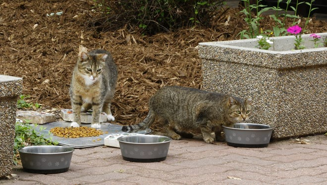 The cats get fed on Tuesday, June 12, 2018, at Mount View Care Center in Wausau.