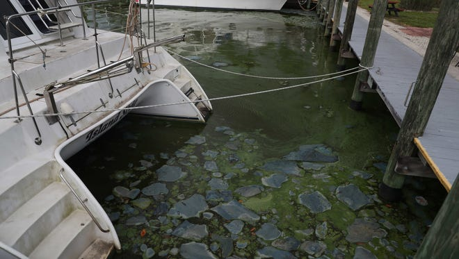 Some residents in North Fort Myers and Cape Coral are seeing the brunt of recent algae blooms that is permeating parts of the Caloosahatchee River.  Gov. Rick Scott declared a state of emergency yesterday. All these images are from North Fort Myers off of Orange Grove Boulevard.