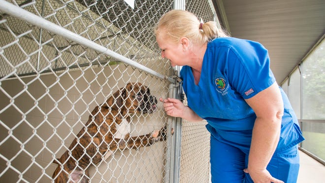 Kennel supervisor Dora Thomason checks on a boxer at the Santa Rosa County Animal Shelter in Milton on Friday, July 6, 2018. The shelter will lift its breed discrimination ban on dogs beginning Oct. 1.