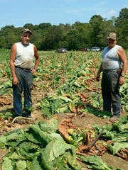 Pictured, from left, Donnie Killian and brother Jeff in the family's tobacco field in Cumberland Furnace.