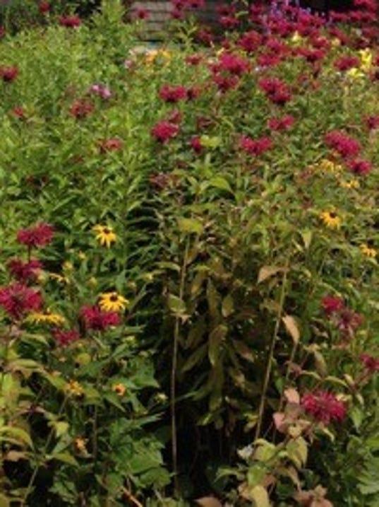 635889054327505622-Backyard-habitat-2.jpg