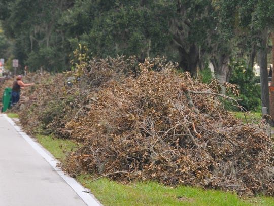 Vegetation and other Hurricane Irma-related debris