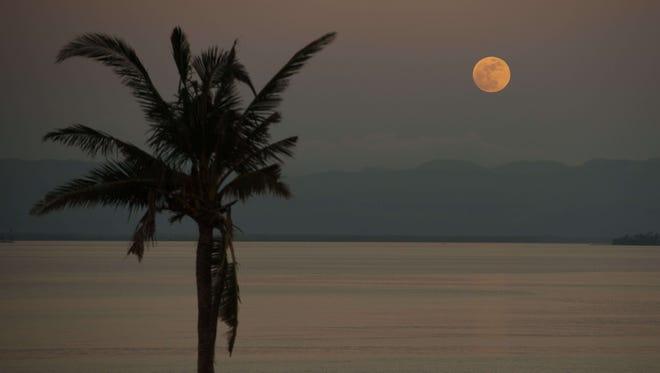 A palm tree is silhoutted against a full moon in Tacloban, Philippines, on Nov. 17, 2013. Scientists report of a possible link between full and new moons and big earthquakes.