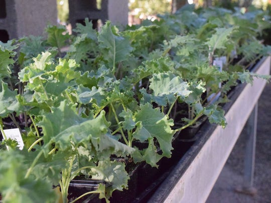 Add fresh greens to your salads with a garden this fall.