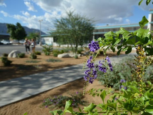 Palm Springs xeriscape