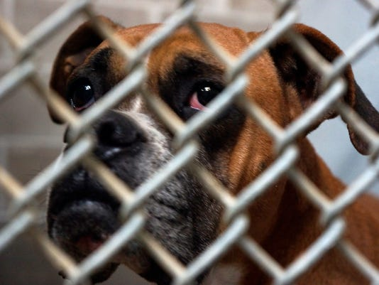 Boxer-in-shelter-cage-by-Brian-Beker.jpeg