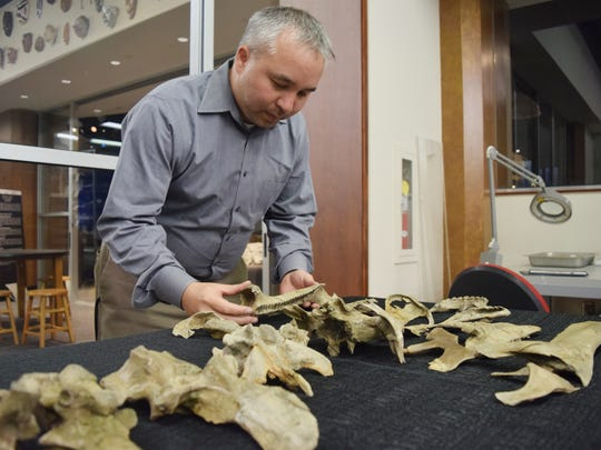 Jun Ebersole, director of collections at McWane Science Center in Birmingham, examines skull and jaw bones from dinosaur skeleton found in Montgomery County, Alabama.