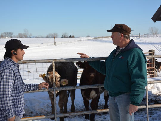 Ken Kinstetter points to some of the organic beef cattle