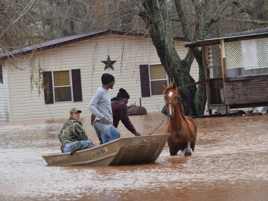Dustin Howell (back, left), a volunteer firefighter, Jay Brown and Justin Smith help rescue horses from a flooded area in Natchez in Natchitoches Parish Thursday.
