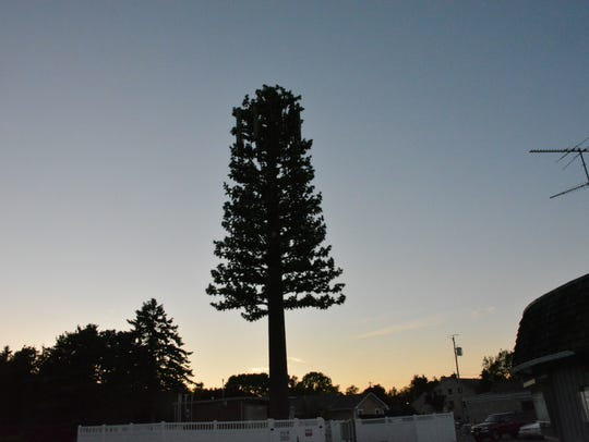 The cell tower disguised as a pine tree behind the