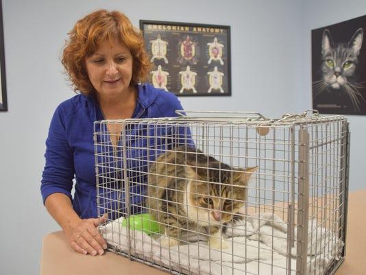 Cat Rescue-