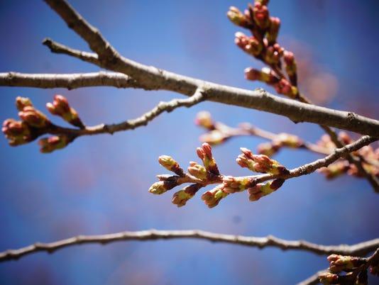 Allergy Season In Delaware Is Just Beginning