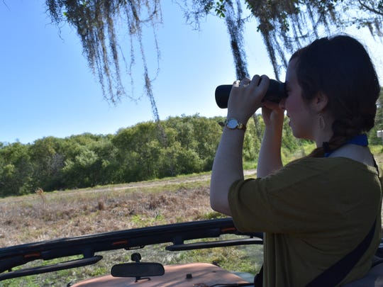 Collier Citizen reporter Ashley Collins spots birds flying over a natural preserve near Ave Maria via Orange Jeep Tours on March 28, 2017.