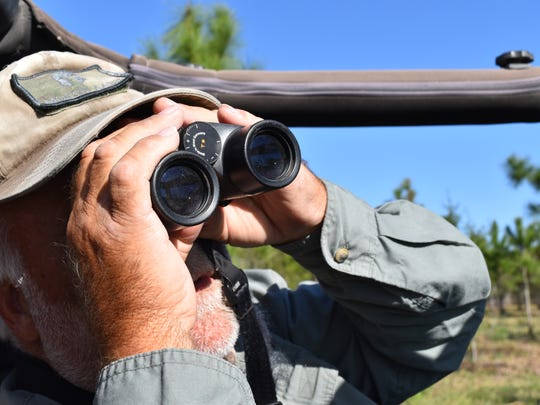 Mike Sullivan, guide and Orange Jeep Tours driver, looks at an alligator through binoculars on March 28, 2017. Sullivan has been giving tours of a natural preserve near Ave Maria for the past three years.