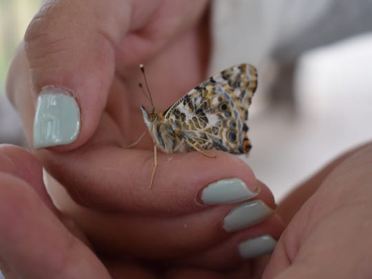 This was one of many butterflies released Saturday