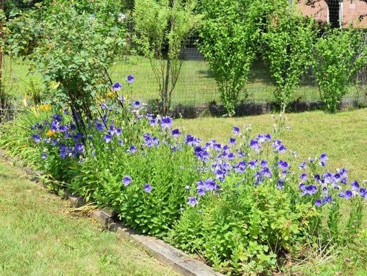 St. Elizabeth garden