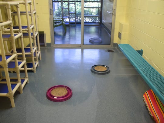 The kennels are almost empty at the Humane Society Naples.