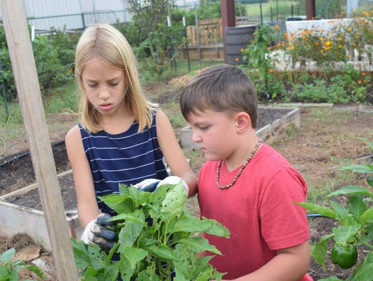 Riley Sharbono and her cousin Andrew Poole pick peppers in the demonstration garden located at the Good Food Project on Baldwin Avenue. The Sharbono family has been volunteering at the Good Food Project for the past four years.