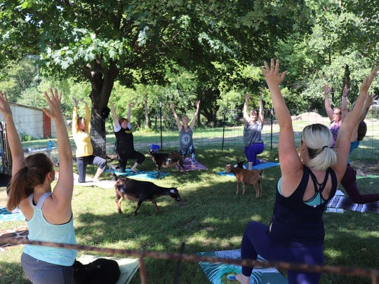 Yogis participate in class at Iowa Goat Yoga in Palo, Ia.